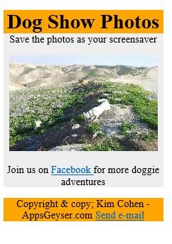 dog show html app